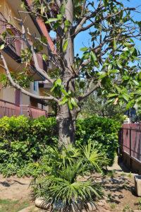 trilocale ristrutturato giardino lissone foto6